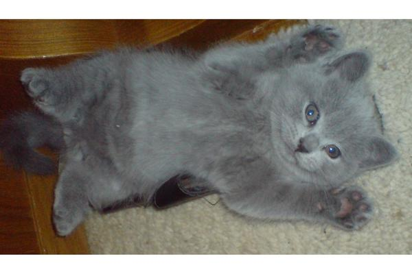 Kart 228 Userbabys In Hattert Katzen Kaufen Und Verkaufen