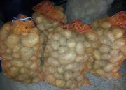 Kartoffeln Sorte Krone -
