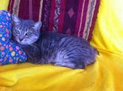 Katze Cola ca.