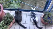 Katze Teddy und