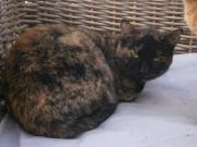 Katze Tugita zu