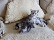 Katzen, Kittens, Katzenbaby
