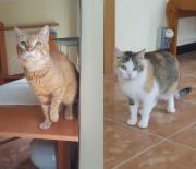 Katzen Paar Lion