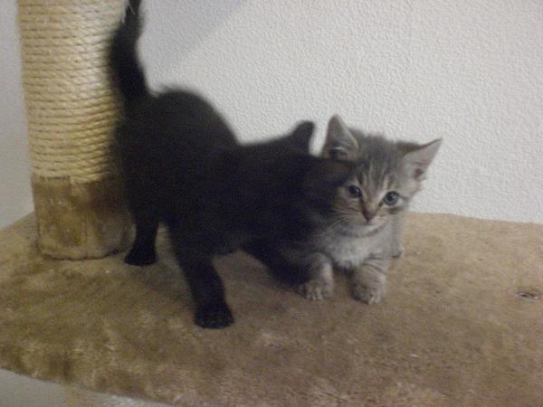 Katzenbabys zu verschenken in offenbach kaufen und - Bilder verschenken ...
