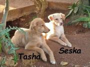 KIRK, TASHA & SESKA -