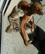 kleiner Mischlingswelpe/ Junghund