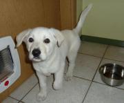 kleiner Welpe Knut