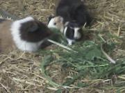 Kleintiere und Zubehör