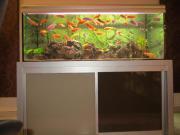Komplettes Aquarium zu