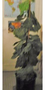 Kunstpflanze ca. 170cm
