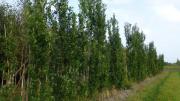 Laubbäume (Laub Bäume)