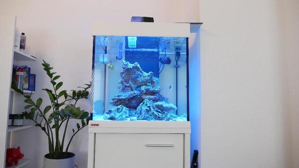 aquarium und fische in illingen w rttemberg kaufen bei. Black Bedroom Furniture Sets. Home Design Ideas