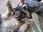 mittelgroßer Schmuse-Hund