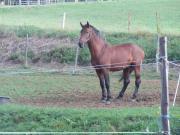Pferdeausbildung & Korrektur Nürnberg