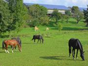Pferdebox, Paddockbox, Laufstall,