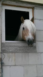Pferdestall oder Paddockboxen