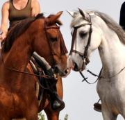 Pferdeverkauf am Wochenende!