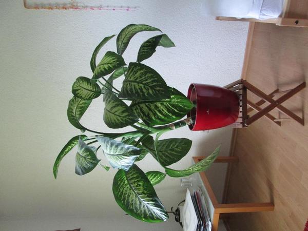 pflanze mit oder ohne bertopf. Black Bedroom Furniture Sets. Home Design Ideas