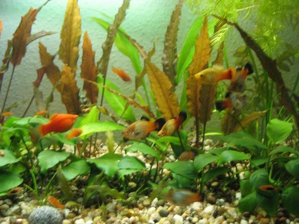 aquarien haltung kleinanzeigen tiermarkt deine. Black Bedroom Furniture Sets. Home Design Ideas