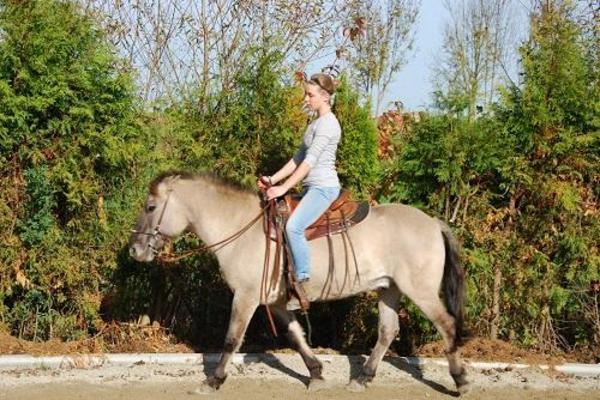 Pony Abzugeben
