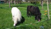 Pony / Ponyreiten als