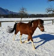 Pony, Wallach