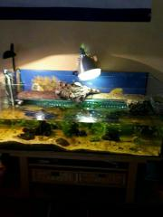 Schildkröten Aquarium