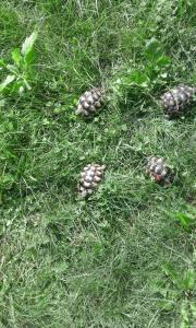Schilkröten