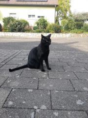 Schwarze Katze vermißt!!!