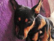 Sid,1 Jahr