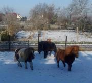 Ständig Ponys u.