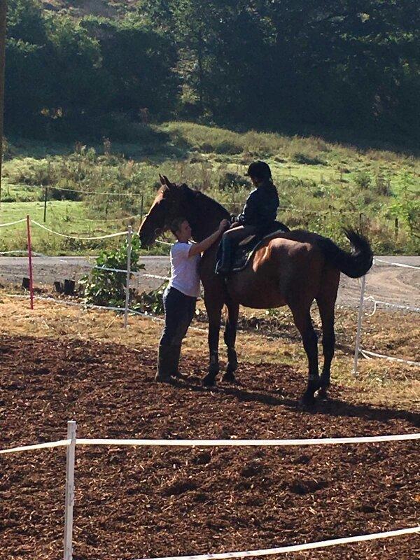 Stelle Pferd Zur Verf Gung In Katzweiler