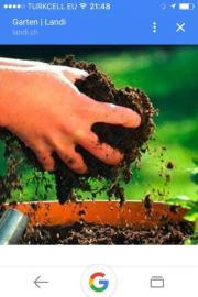 Suche Gartengrundstück in