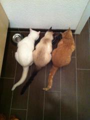 Suche katzenfreundliche 2,