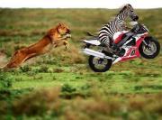Suche Kawasaki,Honda,