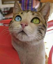 suchen Katzenkind,weiblich,