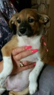 Süßes Hundebaby Lisa