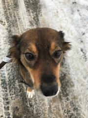Tahiti - Familienhund