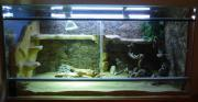 Terrarium, Glas, 120x60x60 +