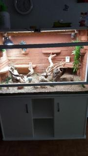 Terrarium in weis