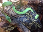 Terrarium, Schlangen, Grüne