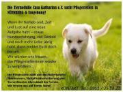 Tierschutzverein sucht ehrenamtliche