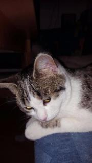 Verisst Katze Thinka