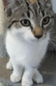 Verspieltes katzenmädchen Lilly