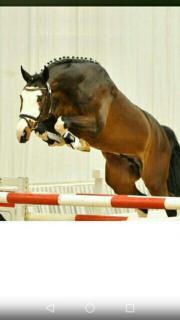 Vielseitiges Pferd zur