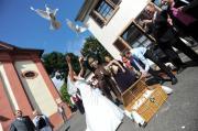 Weiße Hochzeitstauben für