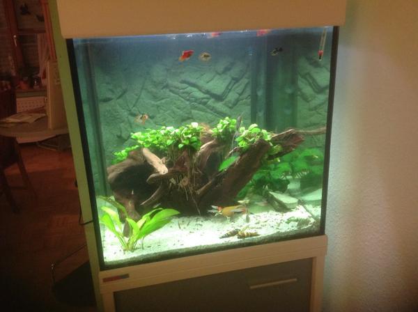 Aquarium r ckwand neu und gebraucht kaufen bei for Aquarium gebraucht