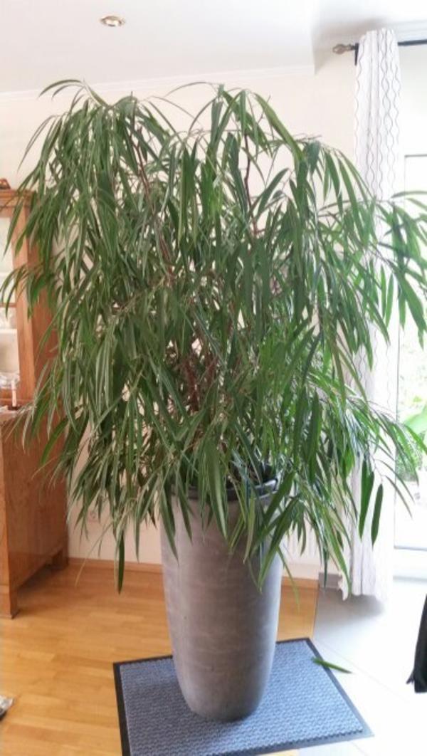 oleander gebraucht kaufen nur noch 3 st bis 65 g nstiger. Black Bedroom Furniture Sets. Home Design Ideas