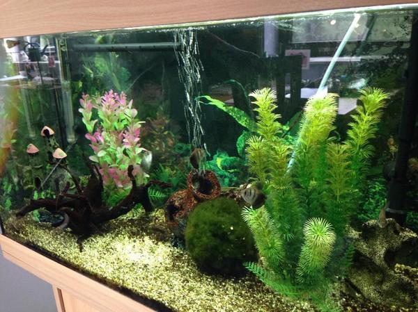 126 liter s wasser aquarium mit unterschrank fischen. Black Bedroom Furniture Sets. Home Design Ideas