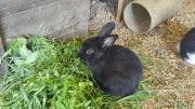 2 Kaninchen 5-